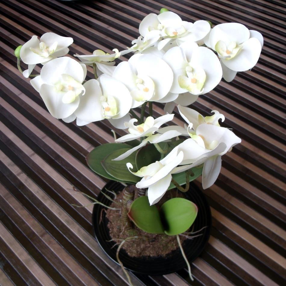Orquídea con alfombra