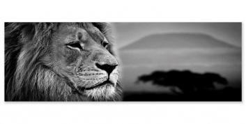 Cuadro fotografía con león