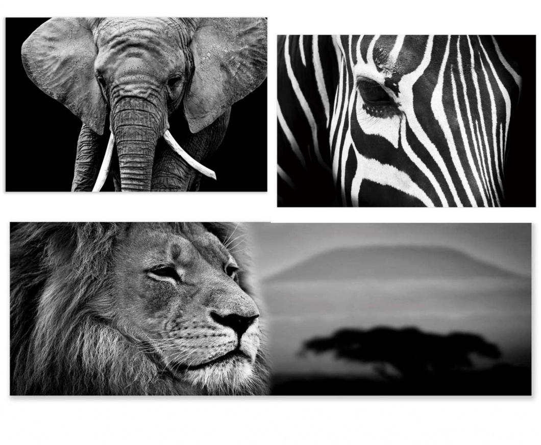 Cuadros de animales en blanco y negro