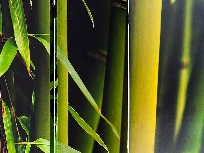Plantaciones de bambú