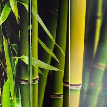 Planta del bambú
