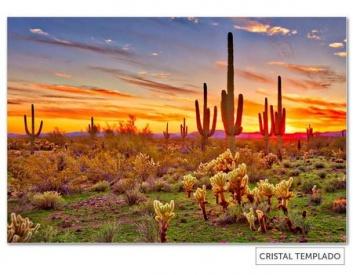 Cuadro de desierto de cactus