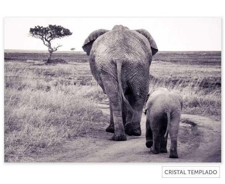 Cuadro con elefantes